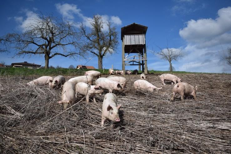 März Schweineweide von Süden